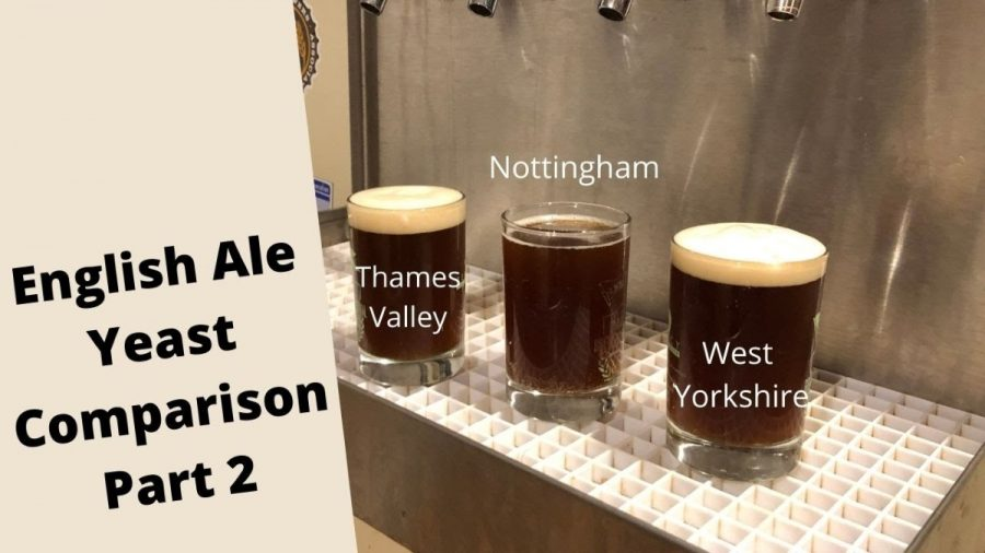Comparing 3 beers with 3 different yeast strains.